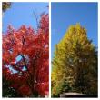 秋のプチ旅🌰