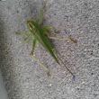可愛い昆虫