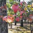 秋色の万博公園 (12)