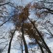 初冬の奥多摩 榧ノ木尾根から鷹ノ巣山、石尾根で下山