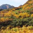 紅葉盛りの越後駒ヶ岳を登る