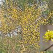 花彩々  春分の日