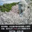 壷阪寺 大雛曼荼羅