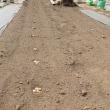 トウモロコシ/枝豆等の定植
