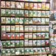 【アタリヤ農園】良い種、球根など県下一の品揃え(╹◡╹)♡お次は、珍しい百合やチューリップ🌷
