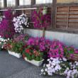 花だんコンクール H30-09-18 ㈫ 曇
