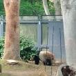 上野動物園でパンダを見た