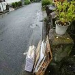 🎵 雨の日曜に、 自治会の草引き作業が強行された