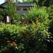 8月の庭仕事
