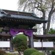 専称寺~磯山桜