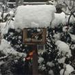 この冬の小鳥カフェ♪ 2018