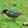 オーストラリア ケアンズの鳥さんNo10