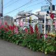 テラダ・カズ アフター日誌! 重量鉄骨マンションの修繕リフォームやってます! 静岡市