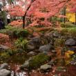 大田黒公園 紅葉2017