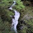 新緑の小田深山