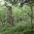 夏の「池の平」湿原