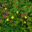【大雪山国立公園・旭岳情報】秋の花々(と、マナーの低下)