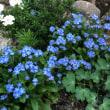 四月の花(前半)