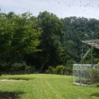 汗のかきついでにグリーンに野芝の刈込作業