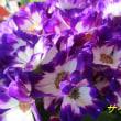 花の眩しさ