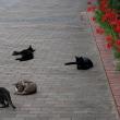 猫ちゃんウォッチング♪