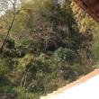 朝屋根珈琲 Café sur le toit le matin