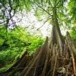 超広角10ミリレンズで撮った小石川植物園の木々(ラクウショウの呼吸根)