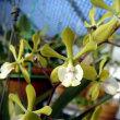 Epi.floribumdum