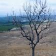 春の沢原高原