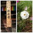 奈良女子旅