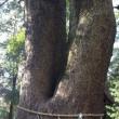 大樹に宿る命