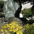 黄色に色づくふるさと佐田岬