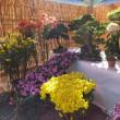 甲賀 大鳥神社の紅葉と菊花展