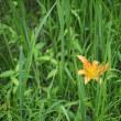 夏の花が満開の水戸市植物公園 2