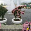 40年ぶりの菊人形展「たけふ菊人形」様変わり。