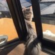 猫様専用ルーフバルコニー。