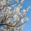 火曜日 快晴 春が来た