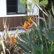 新緑となって夏の花には早すぎる時期になっています