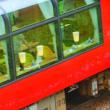 リゾート列車。ミニ百日草