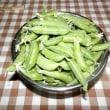 野菜の収穫(スナックエンドウ)