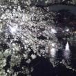 お題「桜は開花しましたか?」