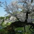千鳥ヶ淵の桜が綺麗だった3月下旬