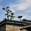 澄んだ青空に映える庭木 (Photo No.14315)