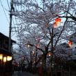城崎温泉 桜が満開に