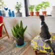 プチ家庭菜園