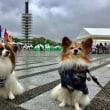 駒沢公園わんわんカーニバル2017 10/15
