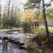 研究林の紅葉