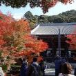 永観堂の紅葉とアオサギ