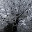雪・交通情報1.22 18時30分現在