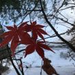 霧と雪と紅葉